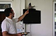 Elazığ'da sağlık çalışanı, balkonuna yuva yapan kumruyu sahiplendi