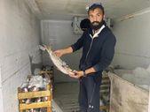 Zonguldak'ta balıkçılar denize açıldı: 60 kasa barbun ve kefal tuttu