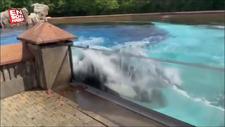 ABD'de 44 yıldır esaret altında tutulan balina intihar etmeye çalıştı