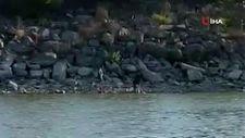 İstanbul'da yasağı dinlemediler, Sazlıbosna Barajı'nda ağ ile balık tuttular