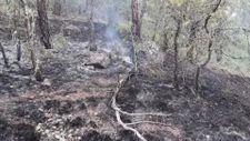 Karabük'te çıkan orman yangını kontrol altında
