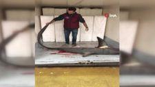 Marmara Denizi'nde 4 metrelik köpek balığı yakalandı