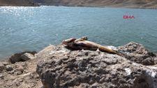 Van'daki ani balık ölümlerinin nedeninin 'şok' olduğu belirlendi