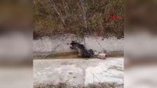 Bolu'da aracın çarptığı yavru ayı öldü