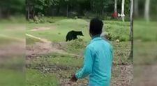 Hindistan'da ormanlık alanda futbol topuyla oynayan ayılar