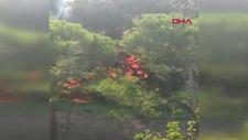 Altunizade'de ağaçlık alanda çıkan yangın söndürüldü