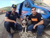 Kastamonu'da, sel felaketinde kaybettiği sahibini arayan vefalı köpek