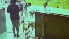 Sarıyer'de hayvan oteline bırakılan köpek öldü