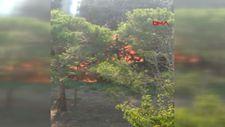 Üsküdar'da orman yangını