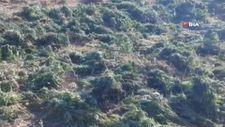 Bingöl'de 337 kilo esrar ele geçirildi