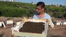 Mersin'de böcek ilacı arıları zehirledi