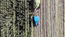 Ağrı'da devlet destekli silajlık mısırın hasadına başlandı