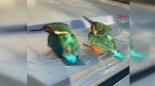 Antalya'da, kalbi duran kuşlar jandarmanın müdahalesi ile hayata döndü