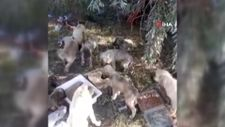 Ankara'da yol kenarına bırakılan 50 yavru köpekten 20'si telef oldu