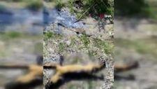 Çubuk'ta zife bulanmış 3 köpek kurtarıldı