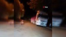 Bursa'da mahalleye inen ayıyı arabayla kovaladılar