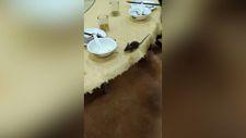 Çin'de restoranda fare paniği