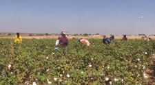 Mevsimlik tarım işçilerinin eve dönüş yolculukları başladı