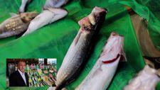 Av sezonunun bereketli başlaması balık fiyatlarına da yansıdı
