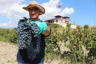 İtalya'dan Amasya'ya getirilen Merzifon karası, ürün vermeye başladı