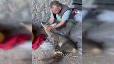 Bartın'da köpeklerin saldırısına uğrayan karacayı köylüler kurtardı