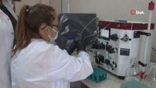 Koronavirüse karşı bitkiden üretilen kokteyl aşı, insan deneyine hazır