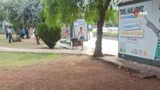 Mersin'de sinir krizi geçiren kadın, otobüs durağına saldırdı