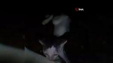 Antalya'da denize düşen yavru kedi, uzatılan bez parçasıyla kurtarıldı