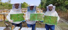 Havalar soğudu, Bursa'da arıcılar propolis üretmeye başladı