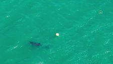 Ayvalık'ta yunusun şamandırayla oyunu drone ile görüntülendi