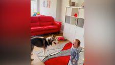 Köpeğiyle yakalamacılık oynayan ufaklığın mutluluğu