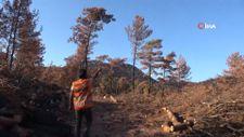 Muğla'da yanan ağaçlar kesilirken, yeniden filizlenen ağaçlara dokunulmuyor