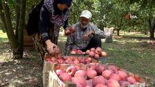 Amasya'da kilosu dalında 1,5 lira olan elma manavda 6 lira