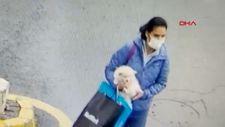Sarıyer'deki kadın, gördüğü köpeği sevdikten sonra çaldı