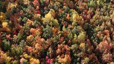 Tunceli'nin Salördek ormanlarında sonbahar renkleri