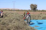 Gaziantep'te nane hasadı sürüyor