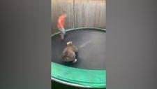 Sevimli köpek ve ufaklığın trambolin eğlencesi