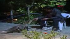 Van'da bir kişi tilkileri besleyerek tavuklarını kurtardı