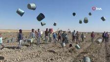 Karaman'da çiftçiler patates hasadına kova atma töreni ile başladı