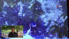 Antalya'da avokado hırsızları üreticiyi bezdirdi