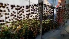 Denizli'de 650 kilo hurma çalan hırsıza operasyon
