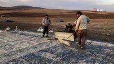 Sivas'ta çekirdeklerin kurutma işlemi yapılıyor