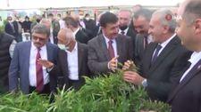 Burdur'da yılın ilk kenevir hasadı gerçekleştirildi