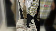 Sultangazi'de,eve giren büyük fare, ev halkını sokağa döktü