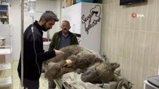 Tokat'ta otomobil çarpan ayı tedavi altına alındı