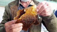 Edirne'de kaçak kraliçe arı, 10 bin arıyla bulundu