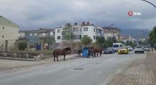 Manisa'da yılkı atları çöp konteynerlerini ve çevresinde karınlarını doyuruyor
