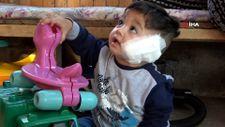 Antalya'da pitbull, baba ve 11 aylık oğlunu hastanelik etti
