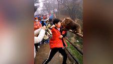 Çin'de çantası için maymunla kavga eden turist