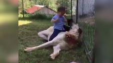 Köpeğin küçük çocukla imtihanı
